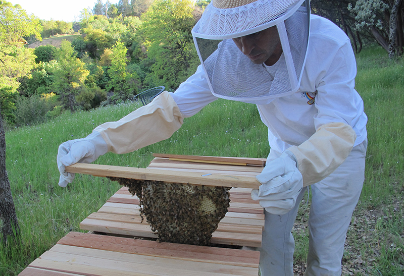 Bee keeping in the foothills